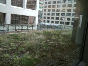 NRDC Rooftop Landscape
